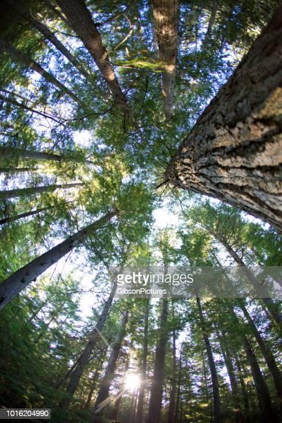looking up op het bos - groothoek stockfoto's en -beelden