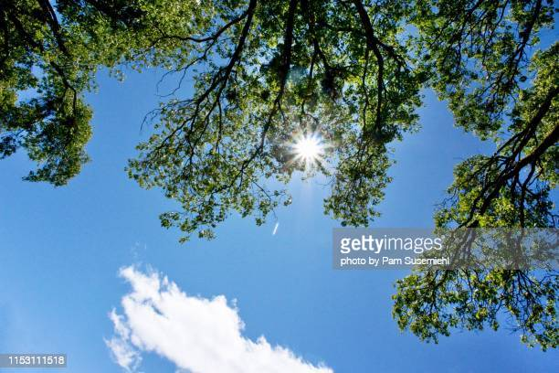 looking up at the sun shining through tree leaves - treetop stock pictures, royalty-free photos & images