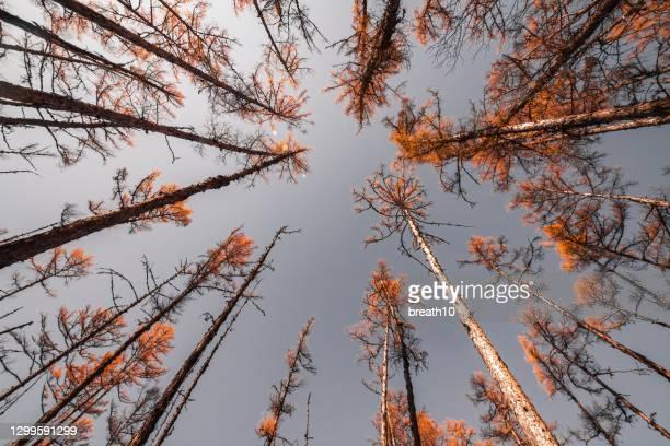 regardant vers le haut aux arbres et au ciel bleu clair - low angle view photos et images de collection
