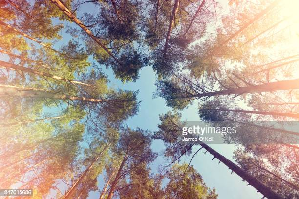 Looking up at trees with lens flare