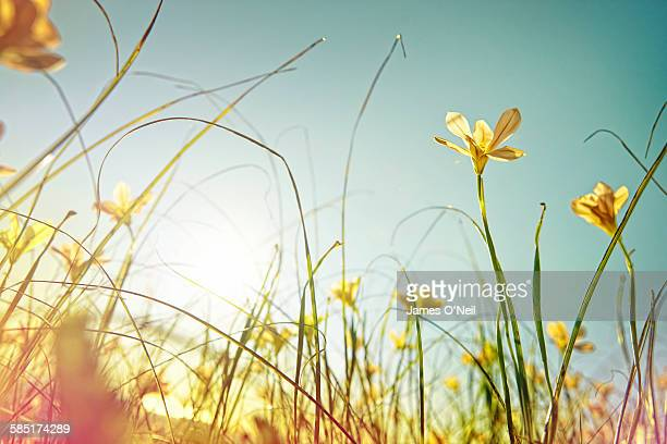 looking up at wild flowers - sunny stock pictures, royalty-free photos & images