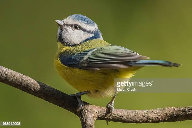 looking up for inspiration - bluetit stock photos and pictures