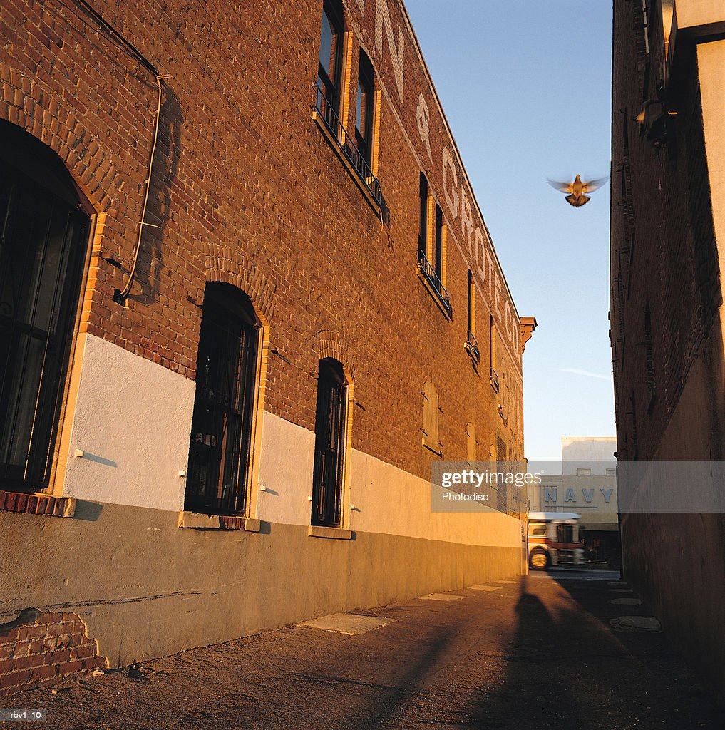 looking up from an alley between two warehouses to see a bird flying in the clear blue sky : Foto de stock