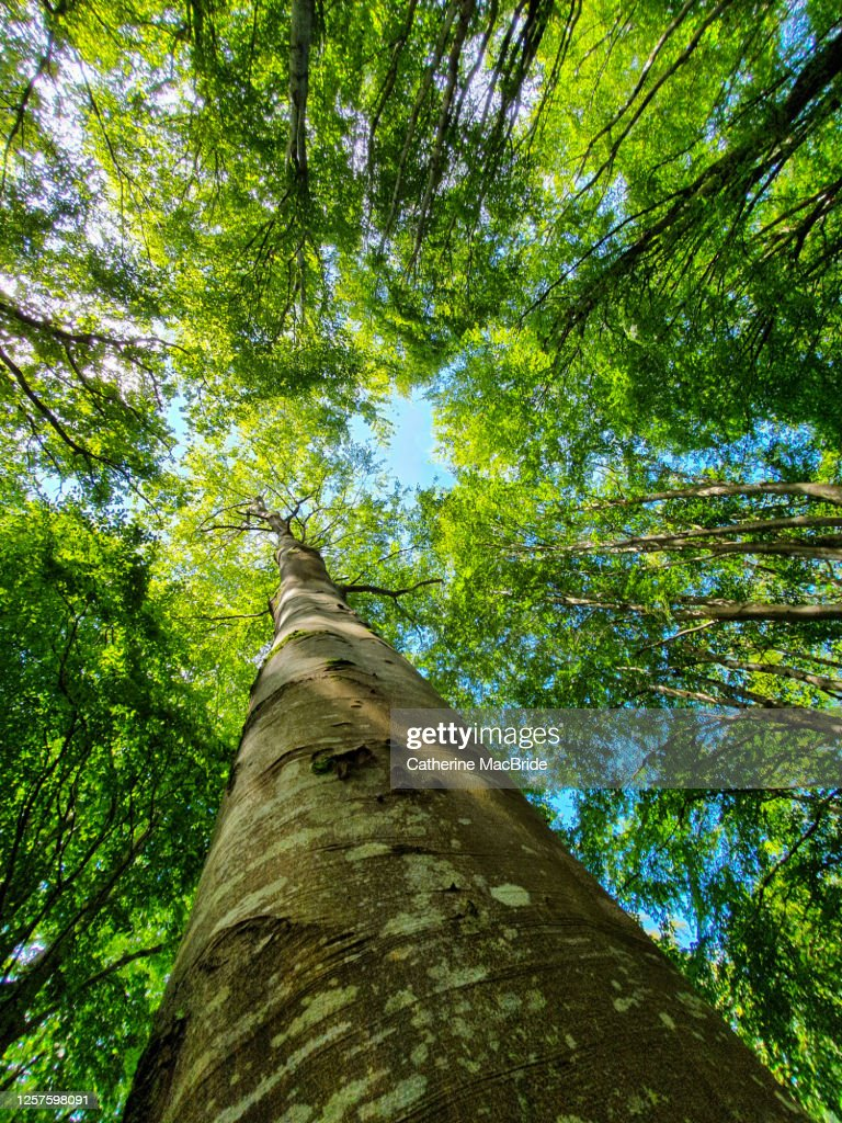 Looking up in the forest : Stock Photo