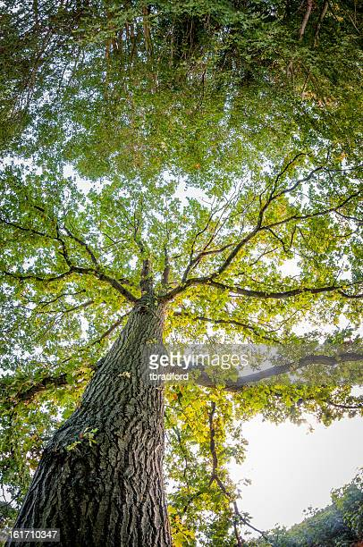 Looking Up Into The Tree Canopy