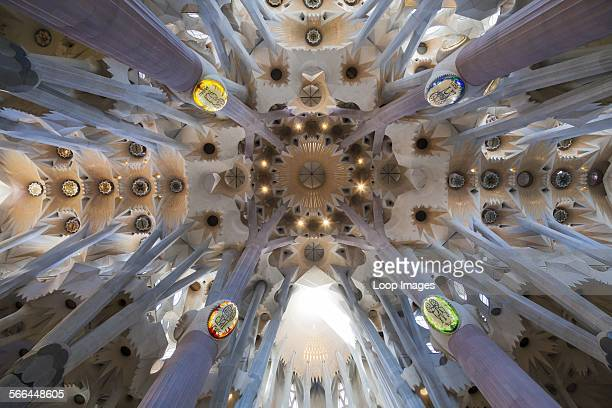 Looking up into the vaulted decorative transept ceiling of La Sagrada Familia Cathedral