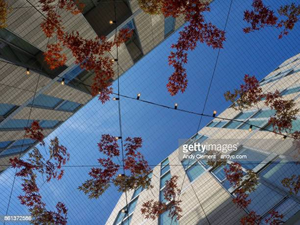 looking up - andy clement stock photos and pictures