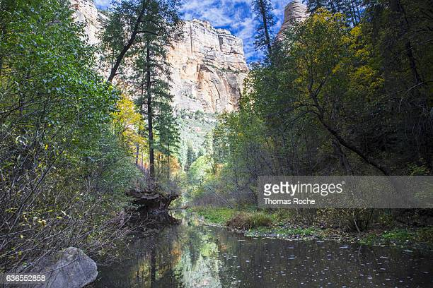 looking up the creek toward the canyon cliffs - oak creek canyon - fotografias e filmes do acervo