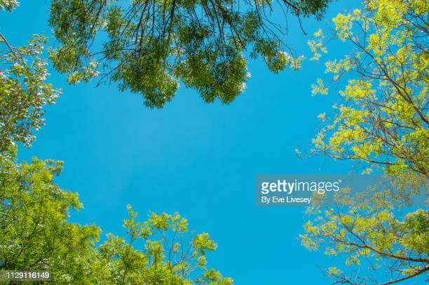 looking up through a tree canopy - generic location stock pictures, royalty-free photos & images