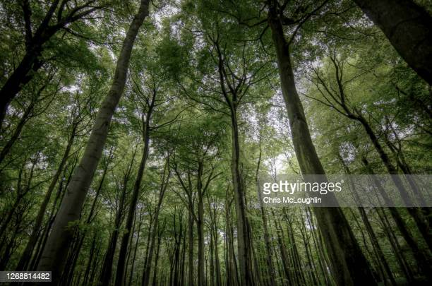looking up through the forrest - forest stock pictures, royalty-free photos & images