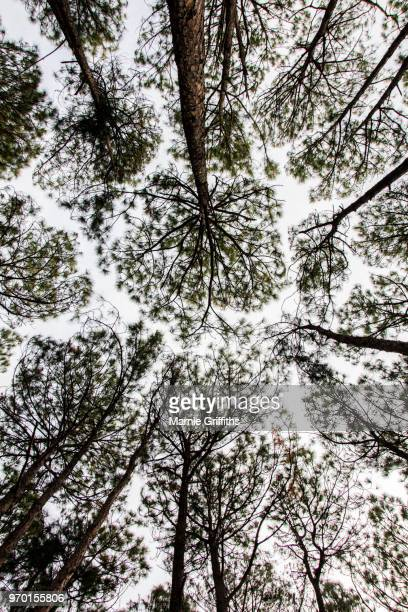 looking up through the treetops - treetop stock pictures, royalty-free photos & images