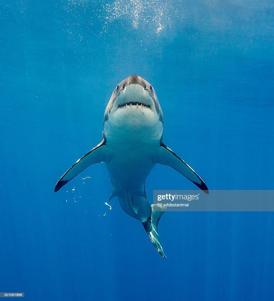 Looks Like Jaws : Stock Photo