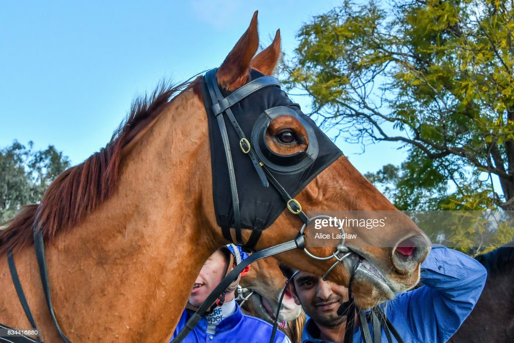 Lord Smedley after winning the Lime Therapy BM64 Handicap at Mildura Racecourse on August 18, 2017 in Mildura, Australia.