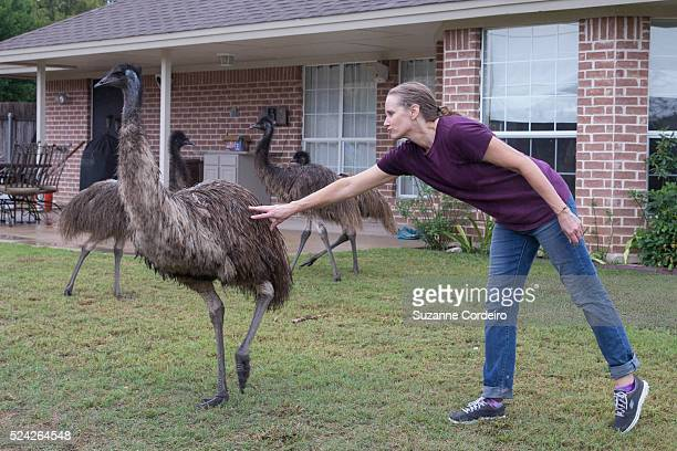 Lori Kessler of Round Rock Texas safely rounds up her four emus which were recovered on Steve Oleson's Valley Creek property on October 22 2015