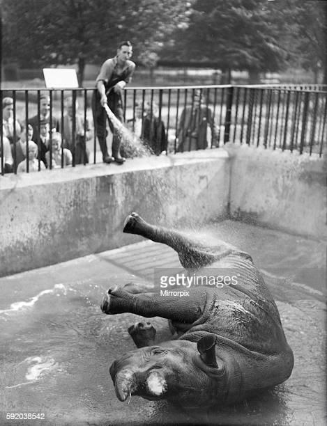 Lorna. Rhino at London Zoo has daily shower- keeper Harry Dean. 025560/4