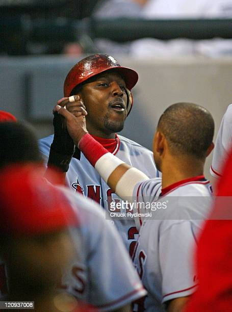 Los Angeles Angels' Right Fielder Vladimir Guerrero gets handshakes from teammates after scoring a run during the game against the Chicago White Sox...