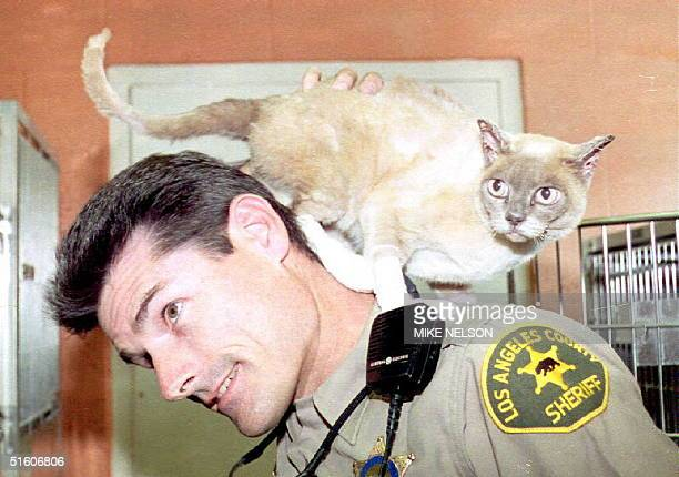 Los Angeles County Deputy Steven Robinson lets Elsa the cat that he rescued after British film director Duncan Gibbons lost his life trying to save...