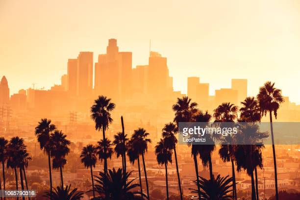 los angeles golden hour cityscape over downtown skyscrapers - palm tree stock pictures, royalty-free photos & images