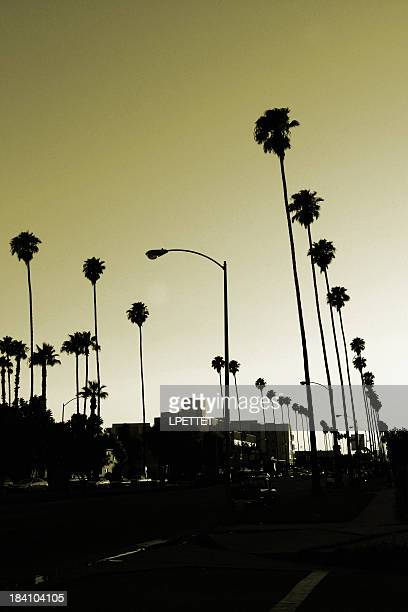Los Angeles palm trees at sunset.