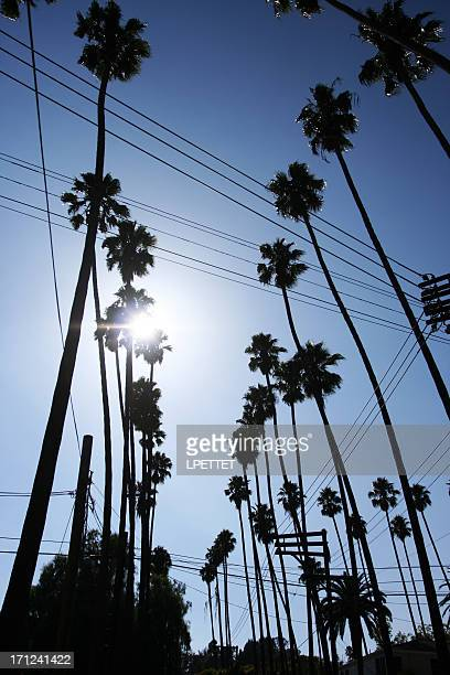los angeles street lined with palm trees - beverly hills stock pictures, royalty-free photos & images