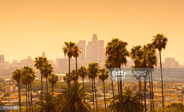 Los Angeles with palm trees in foreground at sunset