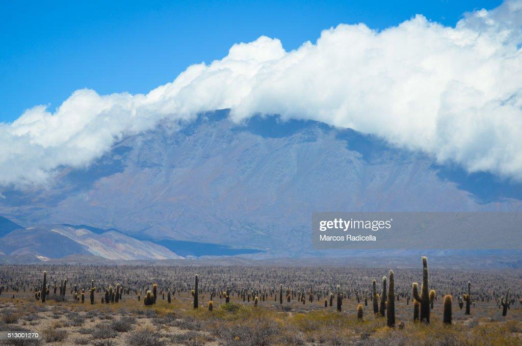 Los Cardones National Park, Salta, Argentina. South America : Stock Photo