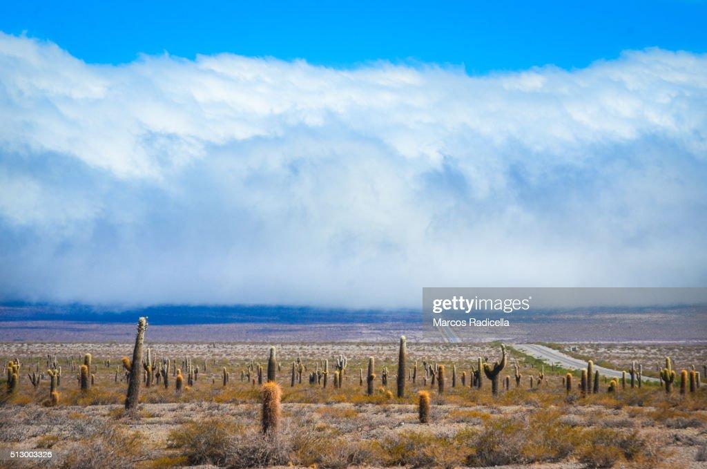 Los Cardones National Park, Salta, Argentina. South America : Stockfoto