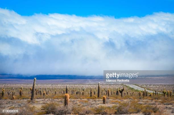 los cardones national park, salta, argentina. south america - radicella stockfoto's en -beelden