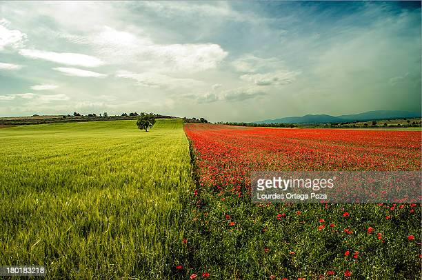 los colores de la primavera - cambiamento foto e immagini stock