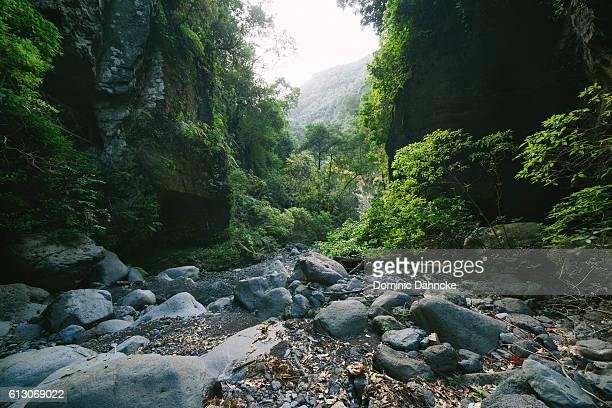 """""""los tilos"""" forest (la palma island. canaries. spain) - dähncke fotografías e imágenes de stock"""