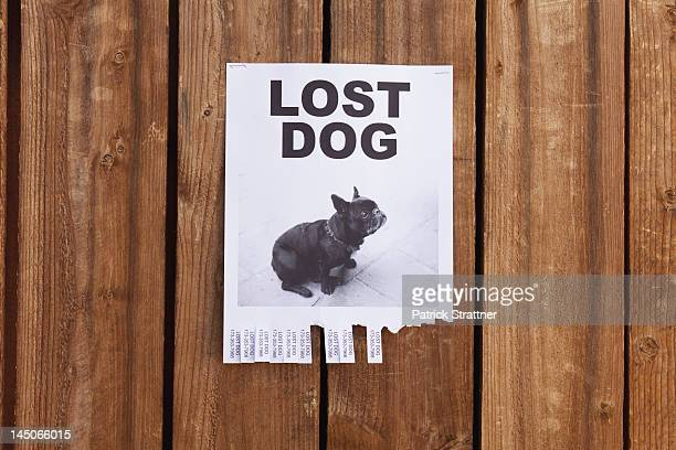 a lost dog flyer posted on a wooden fence - flyer leaflet stock photos and pictures