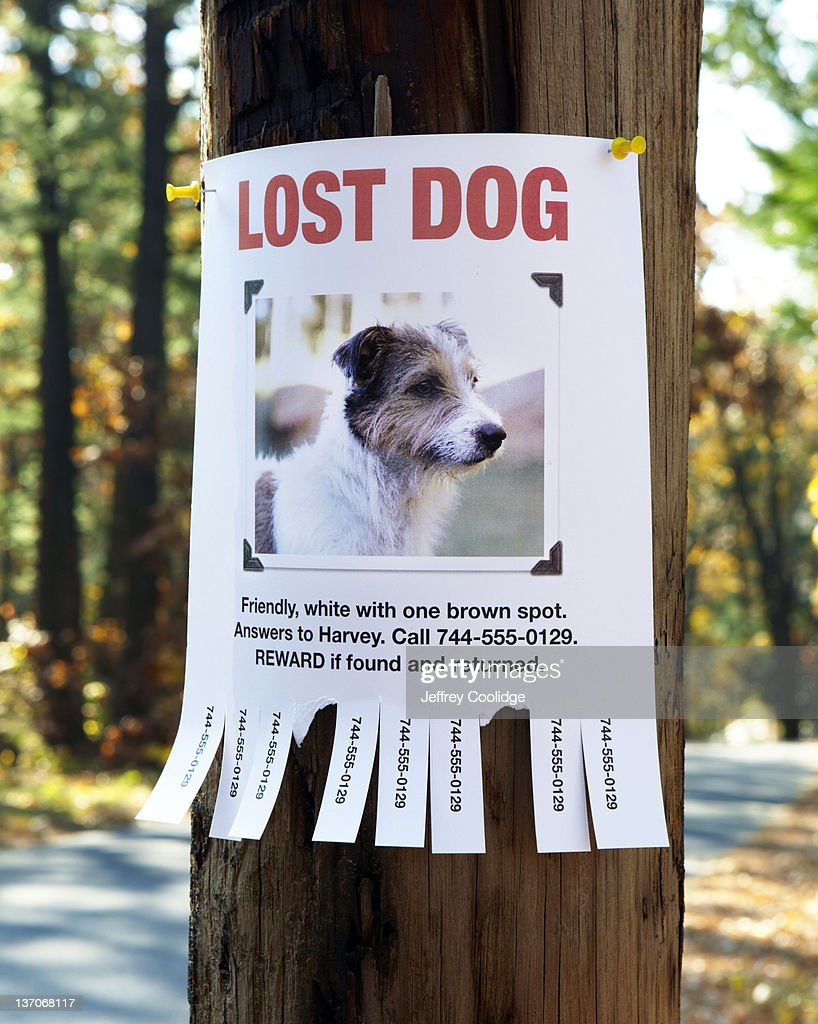 lost dog poster stock photo