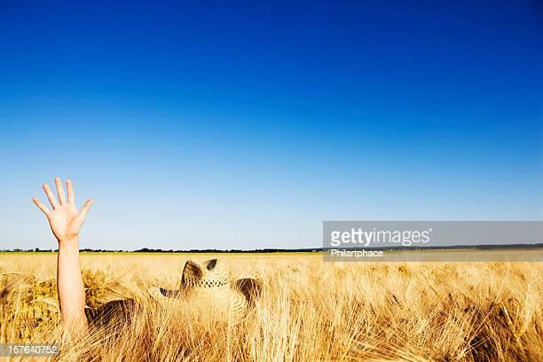 lost in a grain field