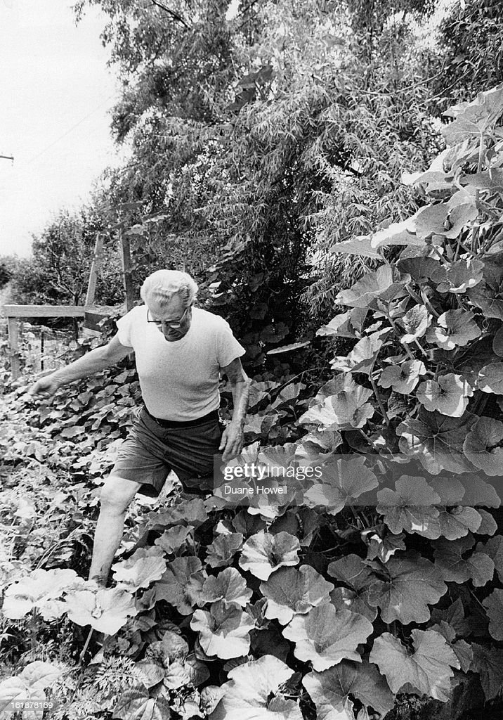 AUG 20 1975, AUG 21 1975; Lost In A Squast Jungle; Henry Wiens, a retired minister who lives at 1625 : News Photo