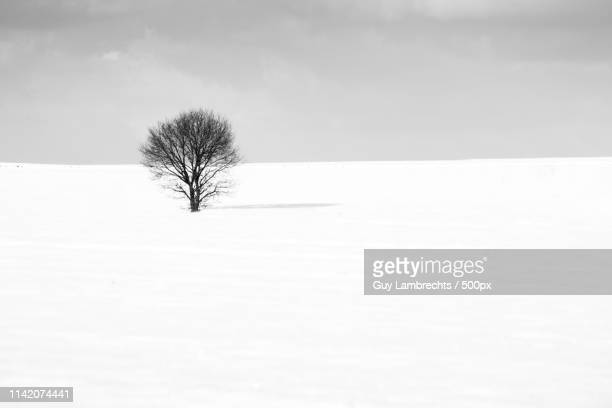 lost in the snow - snow scene stock photos and pictures