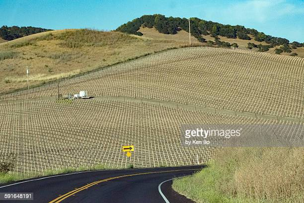 lost in wine country - ken ilio stock pictures, royalty-free photos & images