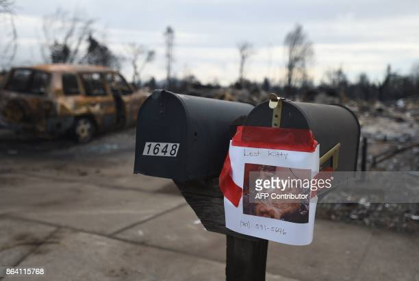 A lost kitty sign is seen posted to the mailbox of a burned out residence in Santa Rosa California on October 20 2017 Residents are being allowed to...
