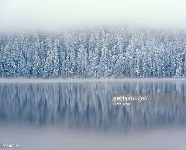 lost lake and snow-covered douglas firs - national forest stock pictures, royalty-free photos & images