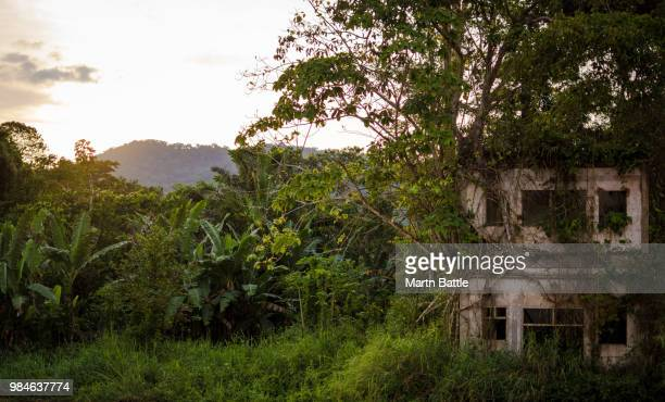 lost past - equatorial guinea stock pictures, royalty-free photos & images