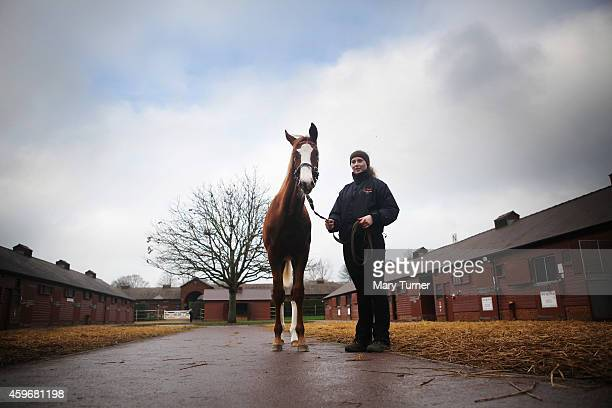 Lot Number 1059 a 7 month old chestnut colt is walked out by his stud hand Jess McCoy at Tattersalls Auctioneers where he is one of four foals by the...