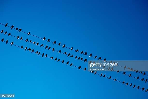 A lot of birds