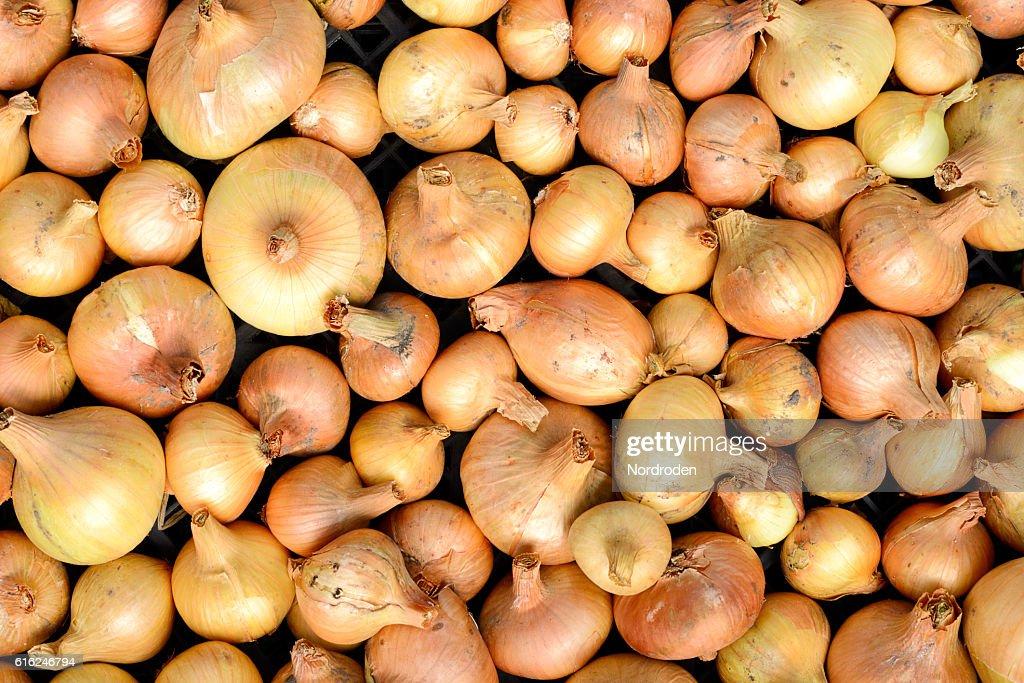 lot of bright beautiful bulb onions. : Stock Photo