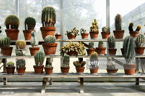 a lot of cactuses in botanical garden - pot plant stock pictures, royalty-free photos & images