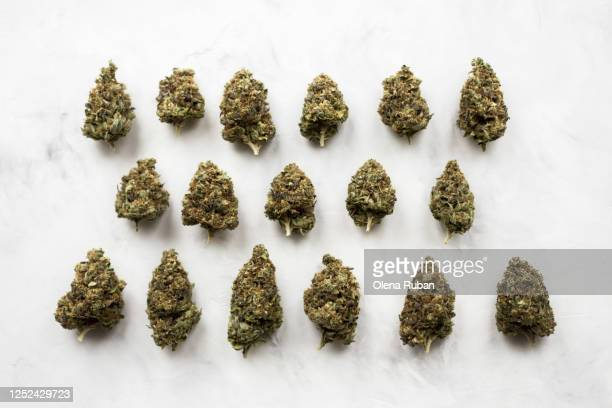 a lot of different hemp cones of different sizes - cannabinoid stock pictures, royalty-free photos & images