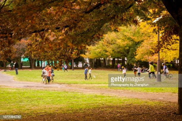 a lot of families and children are palying in the autumn public park. - 風致地区 ストックフォトと画像