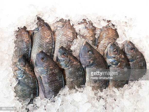 Lot of fresh fish in ice box for sale in retail market at Jakarta, Indonesia