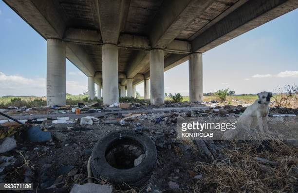A lot of garbage abandoned down under the Asse Mediano highway bridge in around Naples and Caserta hinterland The area is suspected full of toxic...