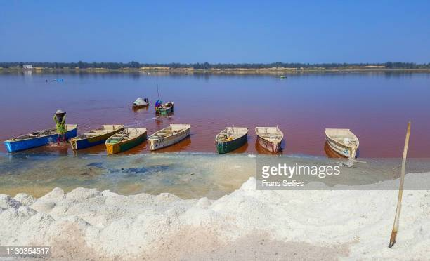 a lot of salt at the pink lake, senegal - frans sellies stockfoto's en -beelden