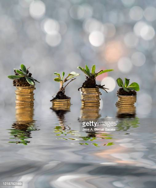 lots of money in coins with plants and flowers growing, reflected in the water. - making money stock pictures, royalty-free photos & images