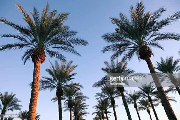 Viele Palmen